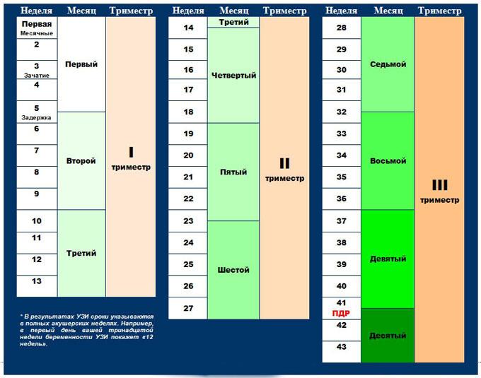 если вдруг 33 неделя беременности это какой месяц таблица найдено решение